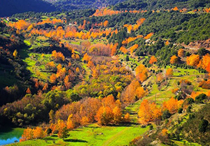 greece_autumn